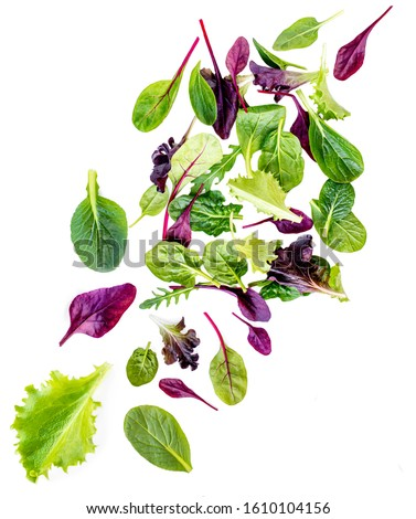 Flying Salad Leaves isolated on white background.   Assortment  with arugula, lettuce, chard, spinach leaves #1610104156