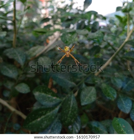Little spider on the web with green leaves background. #1610170957