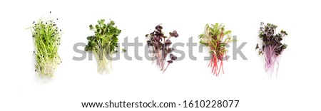 Assortment of micro greens. Growing kale, alfalfa, sunflower, arugula, mustard sprouts, panorama, Healthy lifestyle concept #1610228077