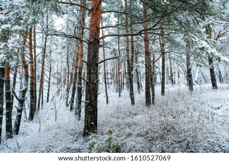 beautiful snowy forest in january #1610527069