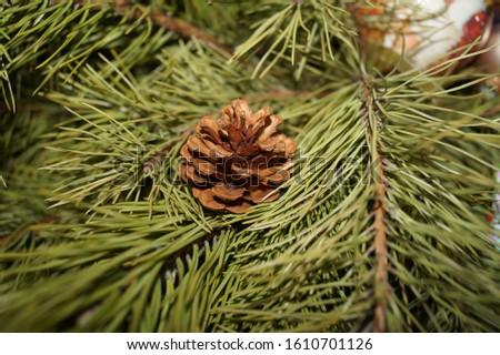 fir christmas fir cone green #1610701126
