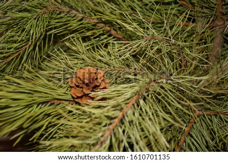 fir christmas fir cone green #1610701135