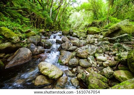Flowing river from windward Oahu #1610767054