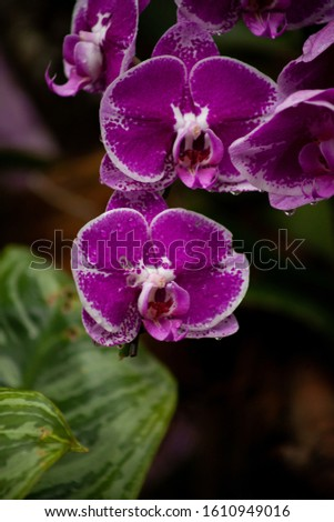 Purple Orchids  #1610949016