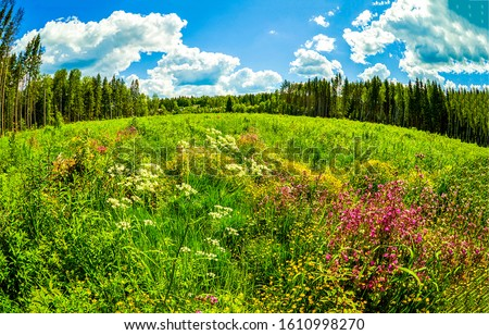Summer forest meadow flowers landscape. Meadow flowers in summer. Forest meadow flowers in summer. Summer meadow flowers view #1610998270