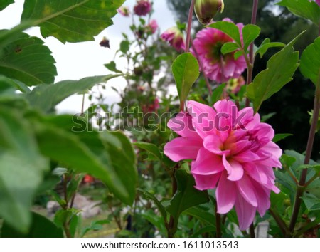 Very beautiful flowers in the garden #1611013543
