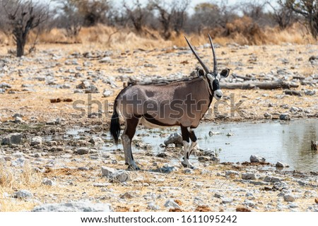 Namibia, Africa. Oryx at Etosha National Park. Namibia June 2019 #1611095242