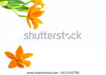 Beautiful isolated orange orchid with white copy space for text. Detailed macro shot of the magnificent blossom. Ideal background for Postcards for Mother's Day or Valentine's Day. #1611142798