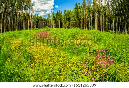 Summer forest meadow flowers scene. Forest meadow flowers in summer #1611265309