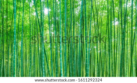 Background material bamboo garden bamboo forest bamboo pole #1611292324