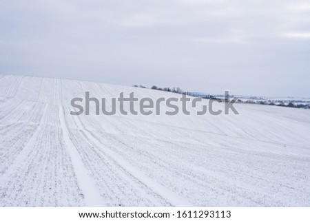 Wheat field covered with snow in winter season. Winter wheat. Green grass, lawn under the snow. Harvest in the cold. Growing grain crops for bread. Agriculture process with a crop cultures #1611293113