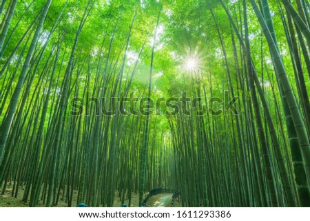Background material bamboo garden bamboo forest bamboo pole #1611293386