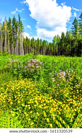 Summer forest meadow flowers scene #1611320539