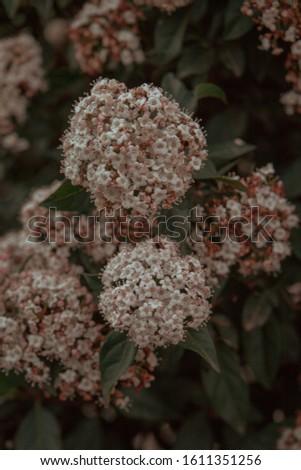 Flowers in bloom in dark background #1611351256