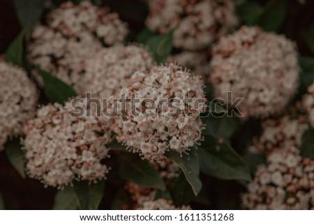 Flowers in bloom in dark background #1611351268