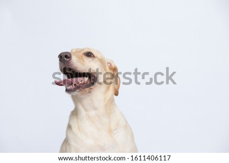The labrador is very excited when dressed in a superman costume, with a variety of emotions including anger, anger and sadness against a gray and white background #1611406117