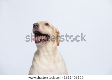 The labrador is very excited when dressed in a superman costume, with a variety of emotions including anger, anger and sadness against a gray and white background #1611406120