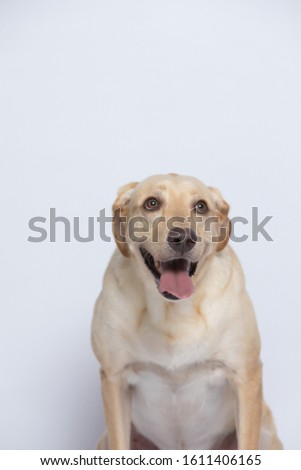 The labrador is very excited when dressed in a superman costume, with a variety of emotions including anger, anger and sadness against a gray and white background #1611406165