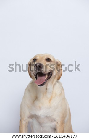 The labrador is very excited when dressed in a superman costume, with a variety of emotions including anger, anger and sadness against a gray and white background #1611406177