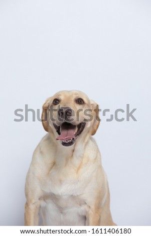 The labrador is very excited when dressed in a superman costume, with a variety of emotions including anger, anger and sadness against a gray and white background #1611406180
