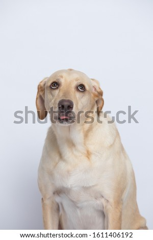 The labrador is very excited when dressed in a superman costume, with a variety of emotions including anger, anger and sadness against a gray and white background #1611406192