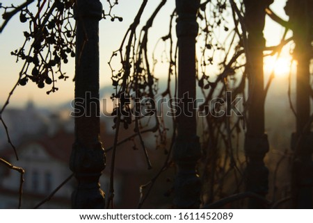 Fence with withy vine on shiny urban city background #1611452089