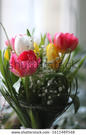 A delicate bouquet of pink, yellow and whtie tulips and white sprig of gypsophila among green leaves: focus on a bright pink tulip #1611489568