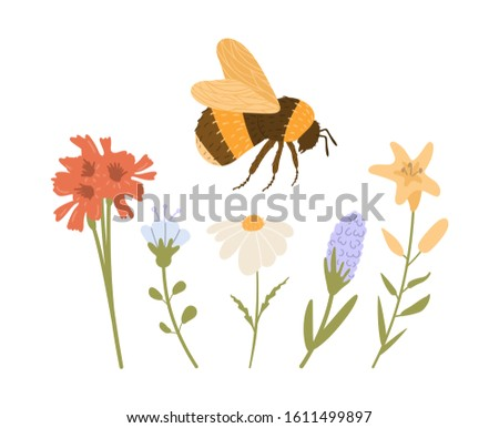 Bee or bumblebee flying over plants. Vector set of different types of flowers - chamomile, lilies, bell, hyacinth. Pollen collection, pollination of honey plants. Detailed hard-working bug with wings. #1611499897