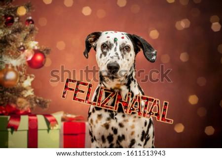 """MERRY CHRISTMAS"": Feliz Natal. Dalmatian dog wishing a merry christmas #1611513943"
