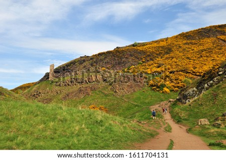 Yellow gorse on the flanks of Arthur's Seat in Holyrood Park, Edinburgh, Scotland #1611704131