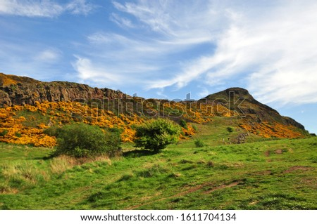 Yellow gorse on the flanks of Arthur's Seat in Holyrood Park, Edinburgh, Scotland #1611704134