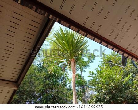 tree trees tree tree tree #1611869635
