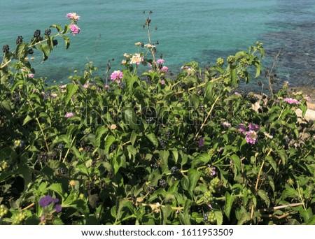 Black and green berries Cyprus seaside #1611953509