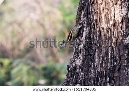 Squirrels are members of the family Sciuridae, a family that includes small or medium-size rodents. The squirrel family includes tree squirrels, ground squirrels, chipmunks, marmots, flying squirrels #1611984835