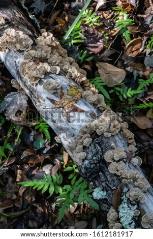 The Beautiful and Complex Forest Floor Ecosystem Decomposers #1612181917