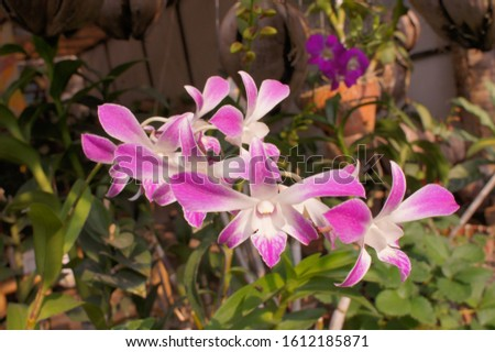 pink white orchid flora of indonesia #1612185871
