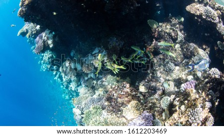 Coral Reef at the Red Sea,Egypt. Underwater landscape with fish and reefs/ #1612203469