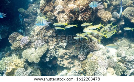 Coral Reef at the Red Sea,Egypt. Underwater landscape with fish and reefs/ #1612203478