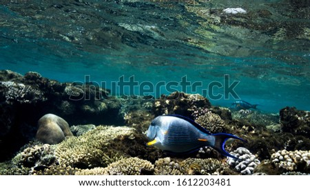 Coral Reef at the Red Sea,Egypt. Underwater landscape with fish and reefs/ #1612203481