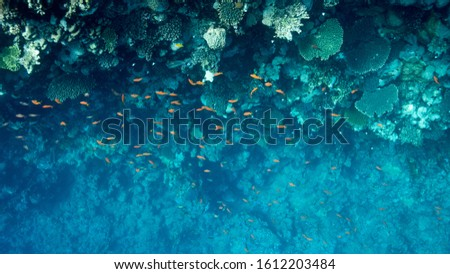 Coral Reef at the Red Sea,Egypt. Underwater landscape with fish and reefs/ #1612203484
