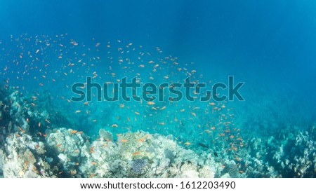 Coral Reef at the Red Sea,Egypt. Underwater landscape with fish and reefs/ #1612203490