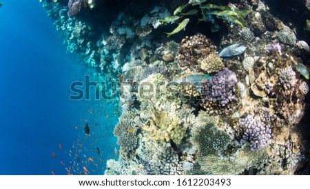 Coral Reef at the Red Sea,Egypt. Underwater landscape with fish and reefs/ #1612203493
