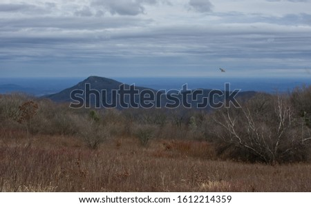 Hawk hunting at Old Rag Mountain in Shenandoah National Park on a cold January day. #1612214359