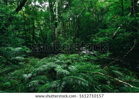 Tropical fern bushes background lush green foliage in the rain forest with nature plant tree and waterfall stream river / Green leaf floral backdrops well as tropical and jungle themes amazon forest  #1612710157