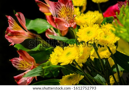 Beautiful collection of flowers for spring time to enjoy is very intoxicating for all to see. #1612752793
