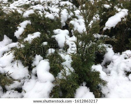 green space in the snow #1612863217