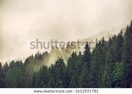 Misty foggy mountain landscape with fir forest and copyspace in vintage retro hipster style #1612931782
