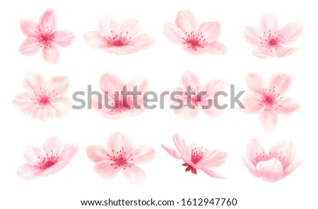 Pink cherry, plum, sakura,apple tree,almond flowers isolated on white background.Valentines day,wedding, mother day,japanese hanami decoration,mother's day, engagement,March eight watercolor clip art