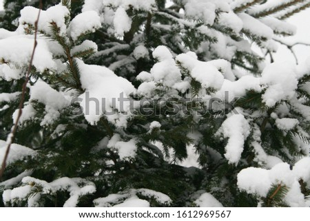 branches of a fir tree in a winter forest covered with snow after a snowfall close up #1612969567