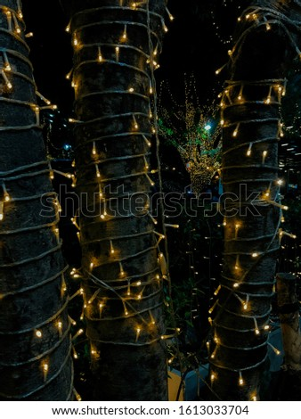Light light light tree beautiful #1613033704